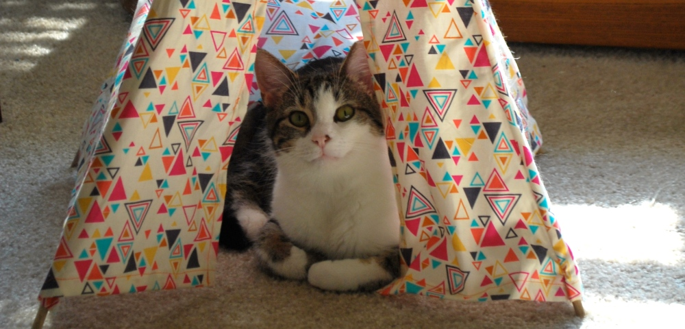 Cat Tepee (6/6)